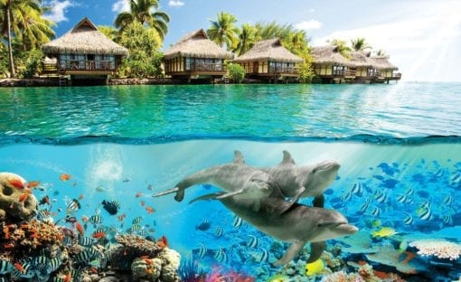 Fototapet med motivet: ナ Paradis Havet Delfiner Fiskar