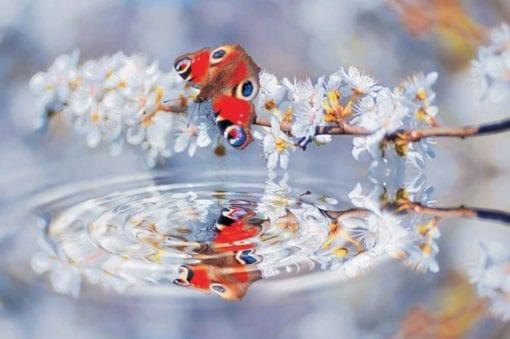 Fototapet med motivet: Fjärilar Blomma Scen