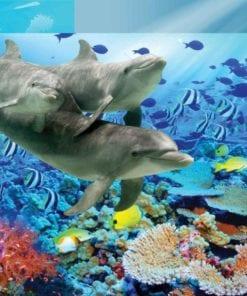 Fototapet med motivet: Delfiner Tropisk fisk