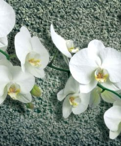 Fototapet med motivet: Blommor