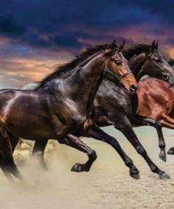 Fototapet med motivet: Häst Ponny
