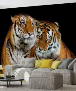 Fototapet med motivet: Tigers