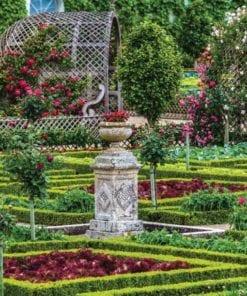 Fototapet med motivet: Ros trädgård