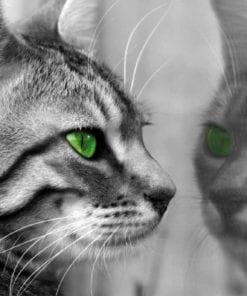 Fototapet med motivet: Katt Kattunge