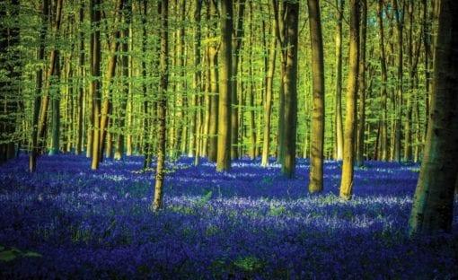 Fototapet med motivet: Skog Träd