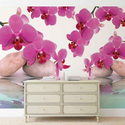 Fototapet med motivet: Blommor Orkidéer