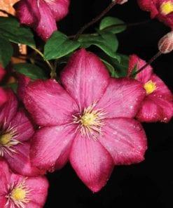 Fototapet med motivet: blommor Natur