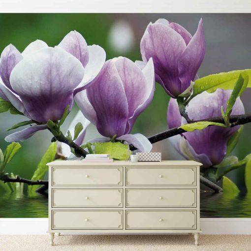 Fototapet med motivet: Blommor Magnolia Vatten
