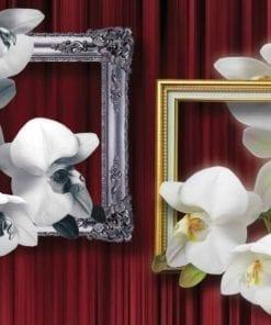 Fototapet med motivet: Blommor Orkidéer Ramar