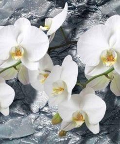Fototapet med motivet: Blommor Orkidéer Textur