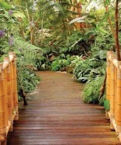 Fototapet med motivet: Skog Natur Gång Bambu