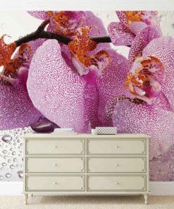 Fototapet med motivet: Blommor Orkidéer droppar