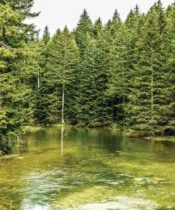 Fototapet med motivet: Flod Skogsnatur