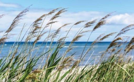 Fototapet med motivet: Strand Hav Sand Natur
