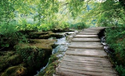 Fototapet med motivet: Skog Vattenfall flödesväg