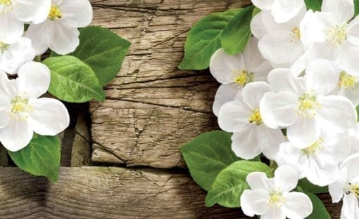 Fototapet med motivet: trä Blommor