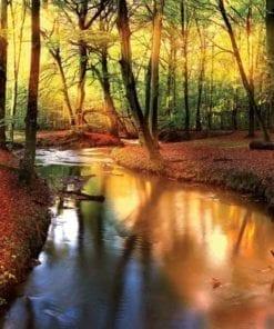 Fototapet med motivet: Skog Flod Ljusstråle ljus Natur