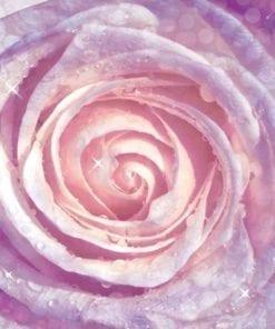Fototapet med motivet: Blommor Ros Natur