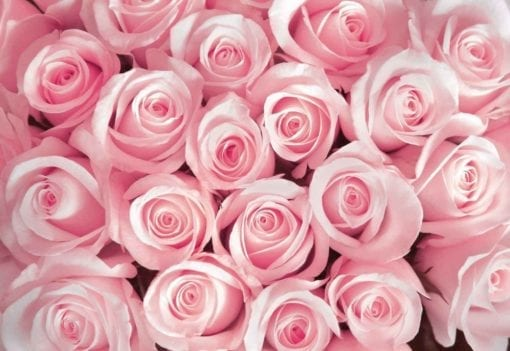 Fototapet med motivet: Blommor Ross