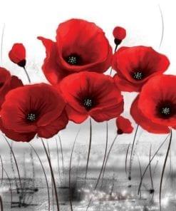 Fototapet med motivet: Blommor Vallmo Natur