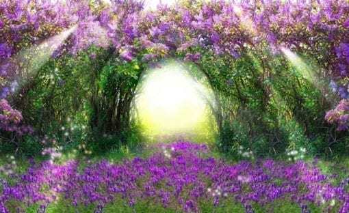 Fototapet med motivet: Blommor Lila Skog Ljusstråle Natur