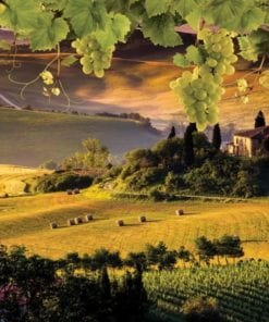 Fototapet med motivet: Liggande italiensk Meadow Kullar Natur