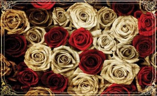 Fototapet med motivet: Blommor Rosor Röd Vit Vintage