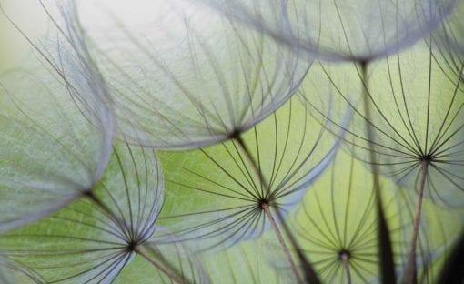 Fototapet med motivet: Blommor Skogsnatur