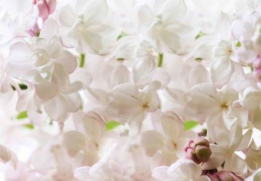 Fototapet med motivet: Blommor Vår Blomma