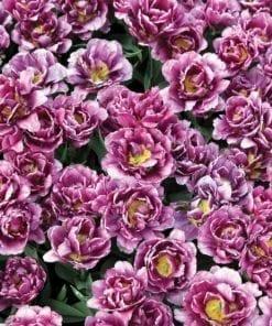 Fototapet med motivet: Blomstrade Blommor Lila