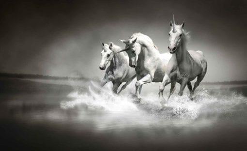 Fototapet med motivet: Enhörningar Hästar Svart Vit