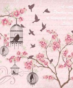 Fototapet med motivet: Fåglar Körsbär Blomma Rosa