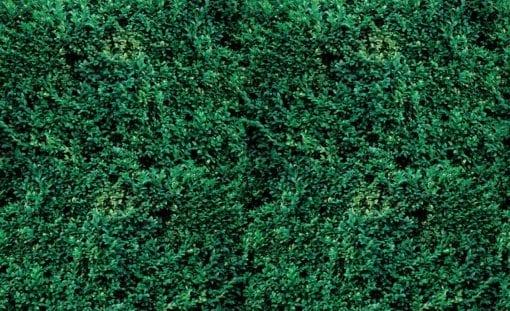 Fototapet med motivet: Grass Textur