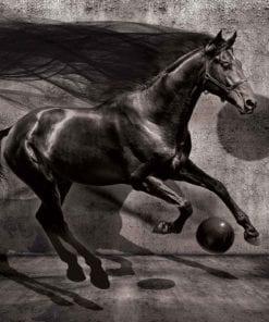 Fototapet med motivet: Häst Sfär Svart 3D