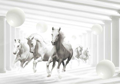 Fototapet med motivet: Hästar Vita sfärer