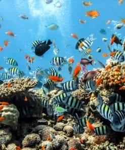 Fototapet med motivet: Hav Fisk Koraller