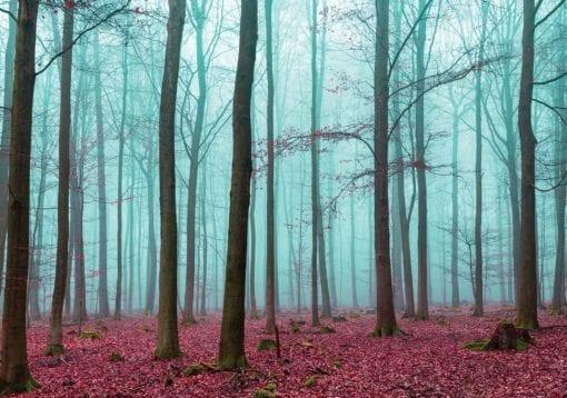 Fototapet med motivet: Natur Trä Skog