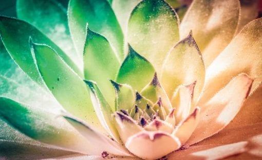 Fototapet med motivet: Natur växt Grön Rosa