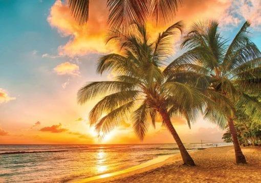 Fototapet med motivet: Palmer på stranden