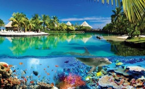 Fototapet med motivet: Paradisö med koraller och delfiner
