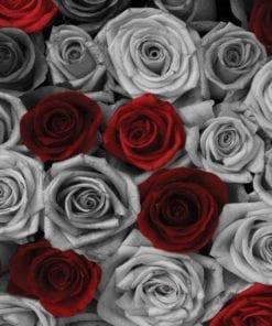 Fototapet med motivet: Röd Grå Rosor blommor Vintage
