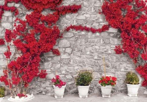 Fototapet med motivet: Röda blommor Sten Vägg