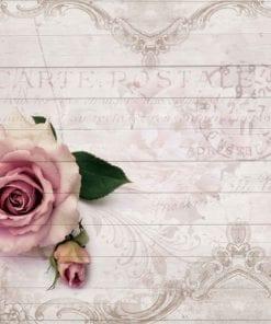 Fototapet med motivet: Rosa ros