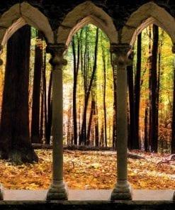Fototapet med motivet: Skog träd Natur