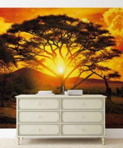 Fototapet med motivet: Solnedgång Afrika Natur Träd