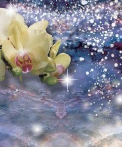 Fototapet med motivet: Sparkle blommor Orkidéer