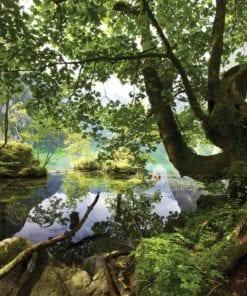 Fototapet med motivet: Träd Sjö Natur
