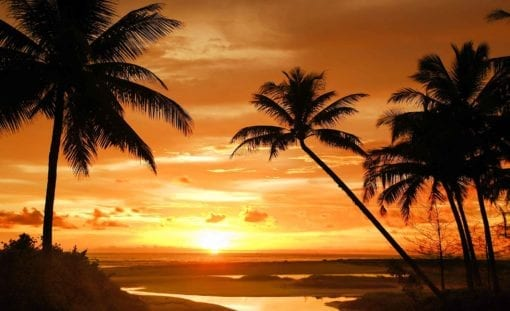 Fototapet med motivet: Tropisk Strand Solnedgång Palmer