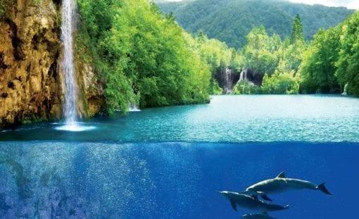 Fototapet med motivet: Vattenfall Hav Natur Delfiner