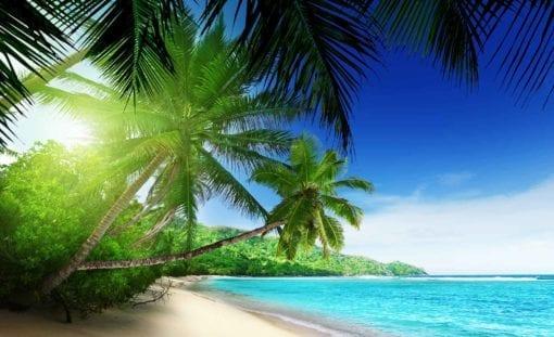 Fototapet med motivet: Visa Paradis Strand Palmer Tropisk